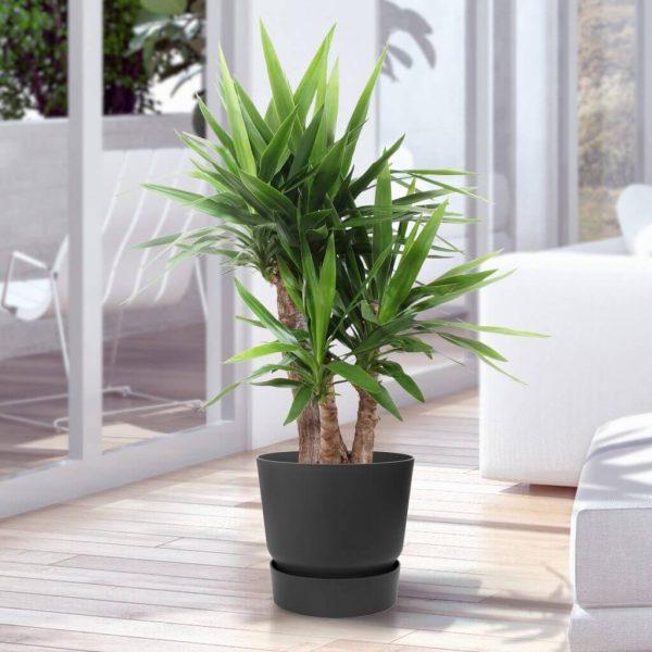 Yucca sfeer