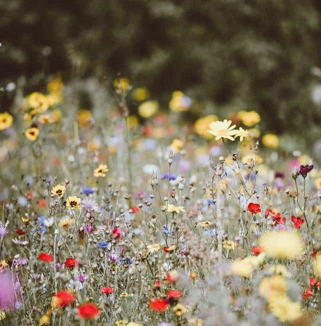 Wildflowers - foto van Unsplash