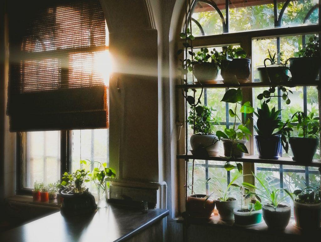 Planten fotosynthese zonlicht