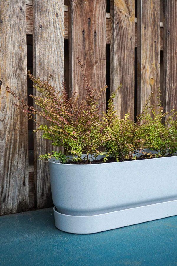 Plantenbak kant-en-klaar grijs met Lonicera Struikkamperfoelie