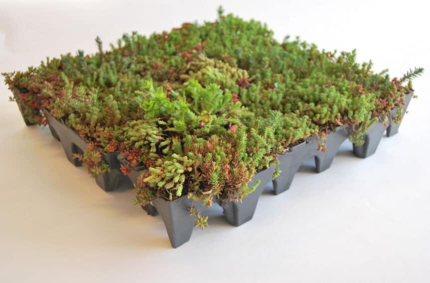 sedum tray systeem voor groendak