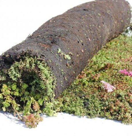 3-laags sedumrolsysteem voor groendak