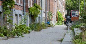 Geveltuin - Gemeente Rotterdam